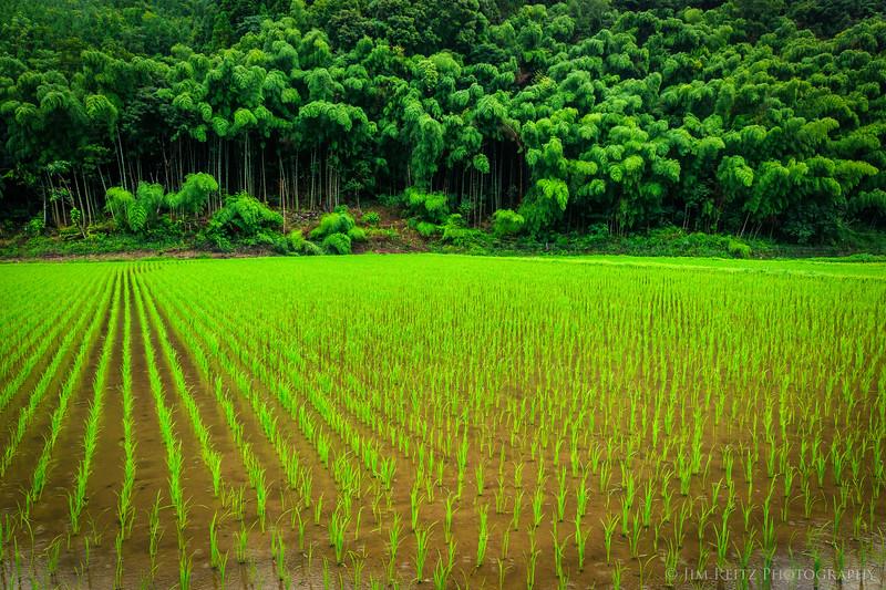 Rice paddy near Hitoyoshi, Japan