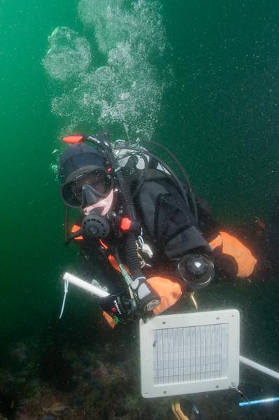 Kelly underwater