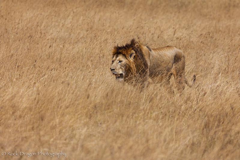 Ngorongoro-70.jpg