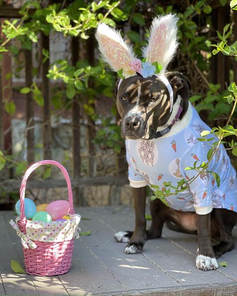 Kaylee Bunny Easter 2021