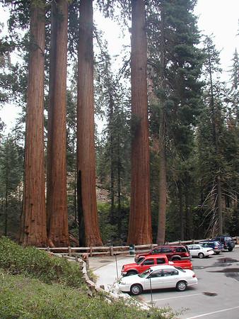 King's Canyon May 29 2004