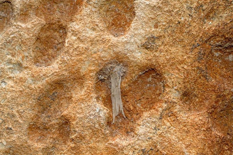 running crab spider Philodromus species near retreat on boulder in Admiral Road gravel pit Bog BioBlitz Sax-Zim Bog MN  IMG_1312.jpg