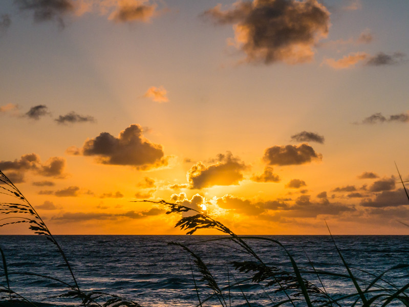 The sun peeks out from behind a cloud as Uniola paniculata (otherwise known as sea oats) wave in the breeze at Municipal Beach in Palm Beach on Tuesday, August 8, 2017. (Joseph Forzano / Deep Creek Images)