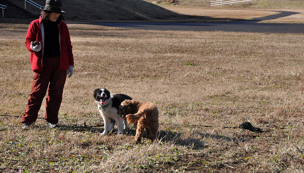 Dogs in Moriya - 29 December 2012