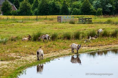 Natuurgebied Leinwijk Kropswolde