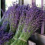Keys Creek Lavender Farm :