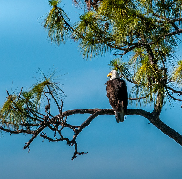 Eagles 4_02-006.jpg