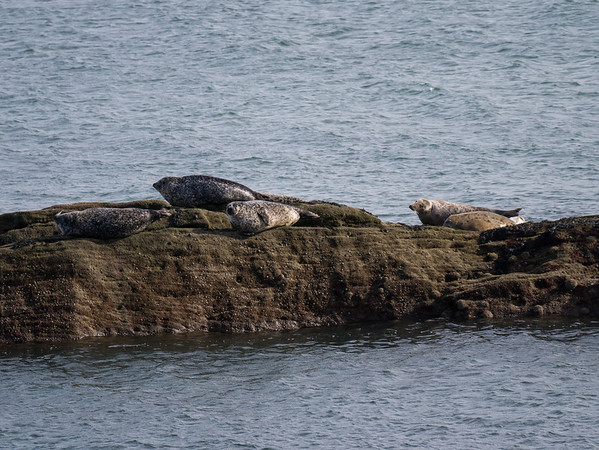 Pictures of the Seals (March 2012)