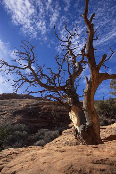 barren-tree-w-sky.jpg