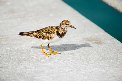 19-Sept North America Birds-3890.JPG
