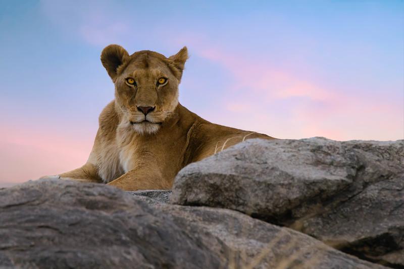 Tanzania-safari-10.jpg