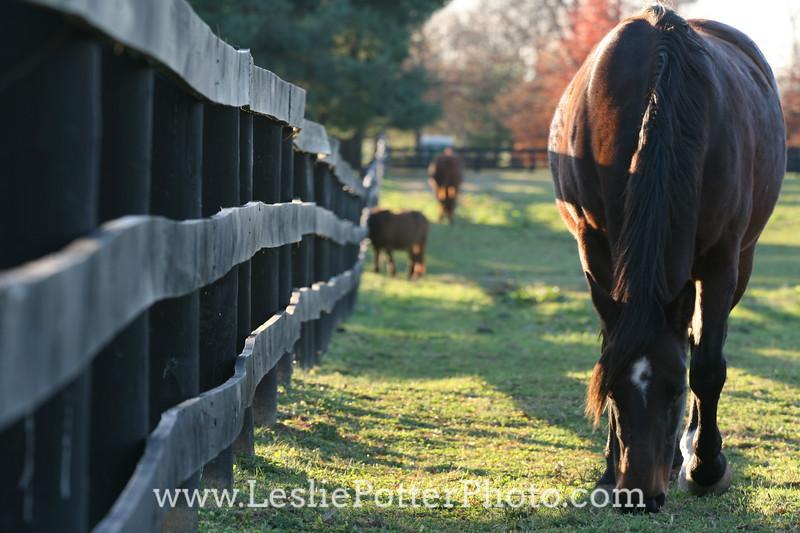 Horses Grazing in Autumn