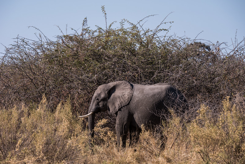 Botswana_June_2017 (385 of 6179).jpg