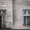 Ghetto Pooch, Kraków, Poland