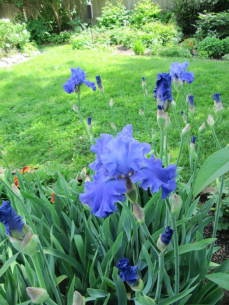 garden-2009-05-0647_std.jpg