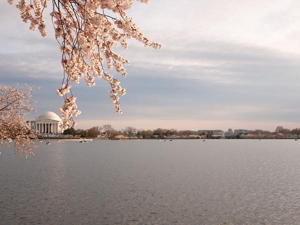 DC Cherry Blossoms (2011-03)