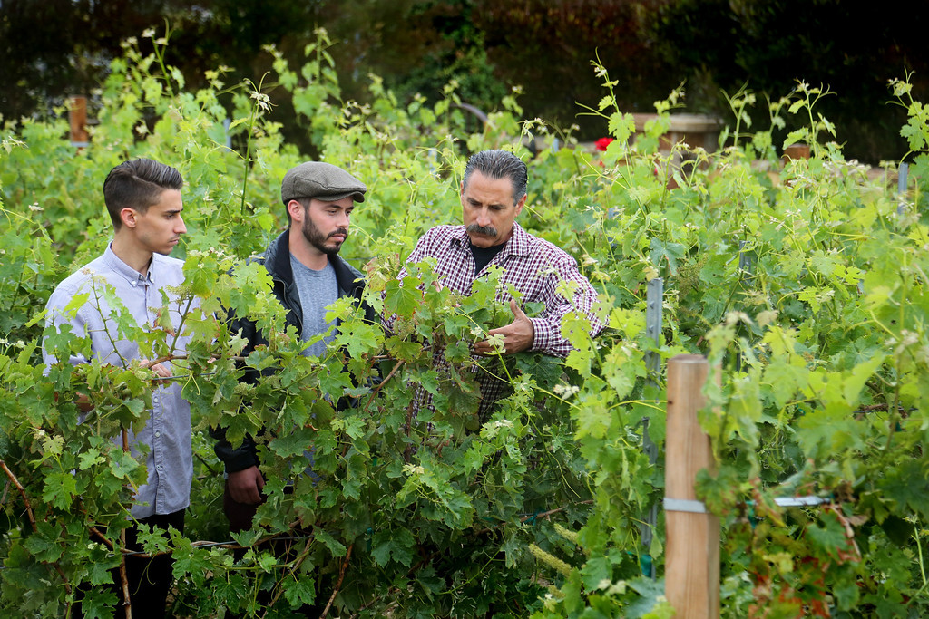 . Lou Roupoli and his son\'s Luigi (left) and Josh is a Rancho Palos Verdes resident and former fire chief who grows his own grapes and makes his own wine. Chuck Bennett/Staff Photographer