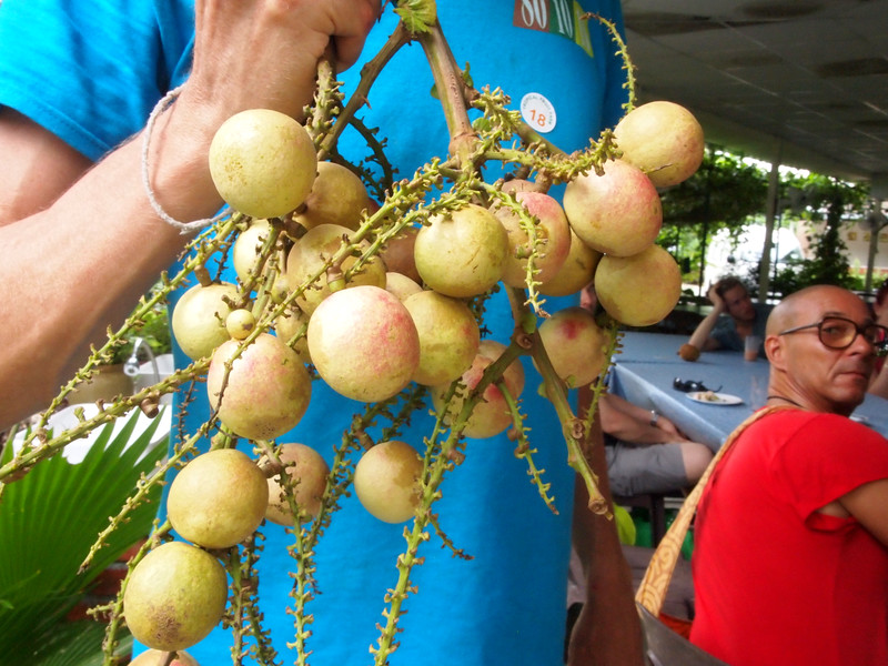 tropical figi longan.jpg