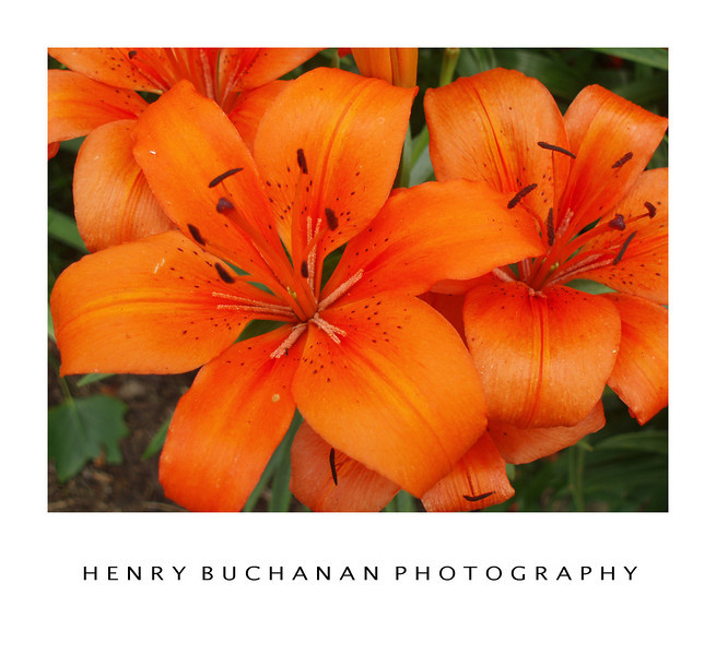 HENRY BUCHANAN PHOTOGRPAHY