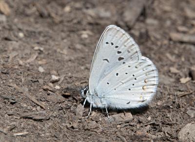 BlueButterfly49703.jpg
