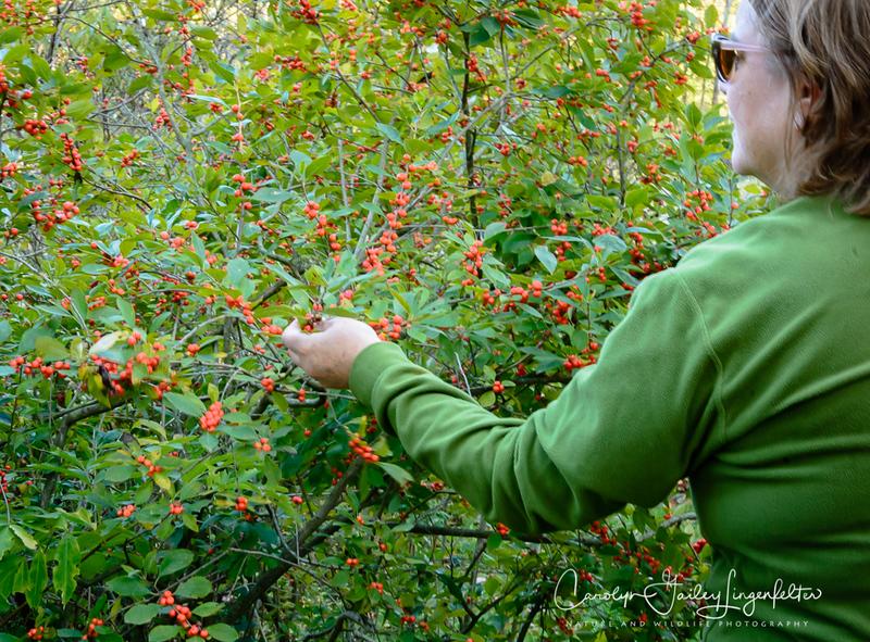 Eyecatching orange berries
