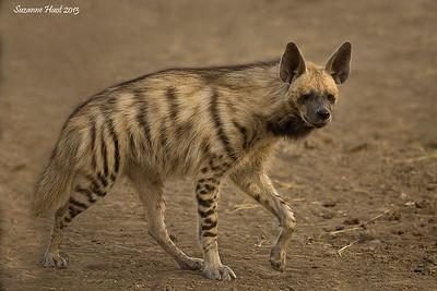Mammals of India