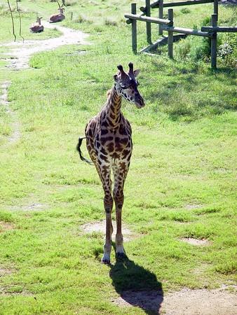 Zebra, Giraffes, Elk, & Sheep Ect.....