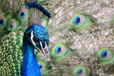 San Diego Zoo - April 22, 2011