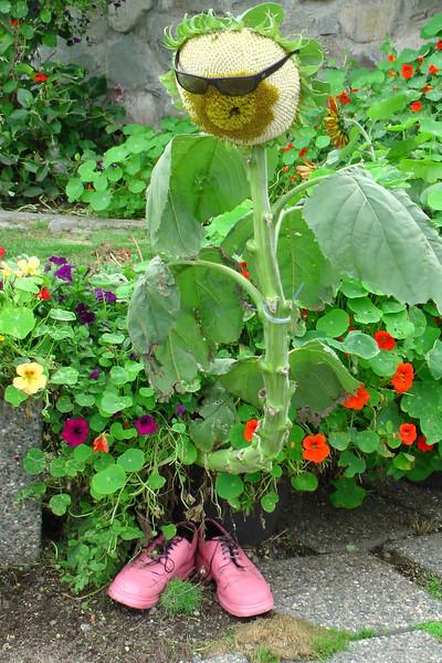 Sunflower dude!