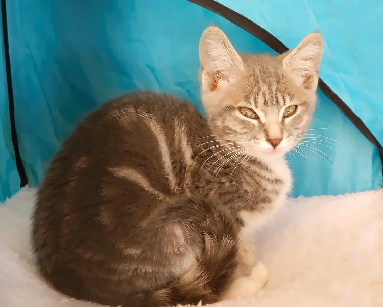 Kitten-1431.jpg