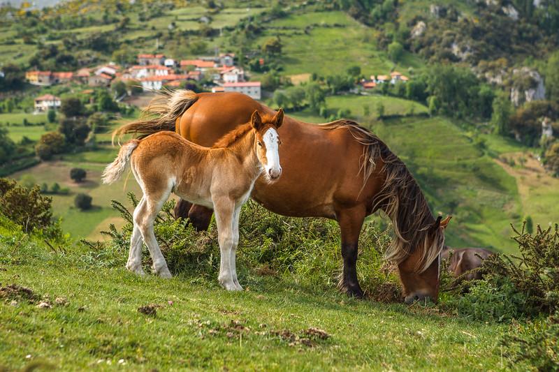 Horses, Liebana. Cantabria, Spain.