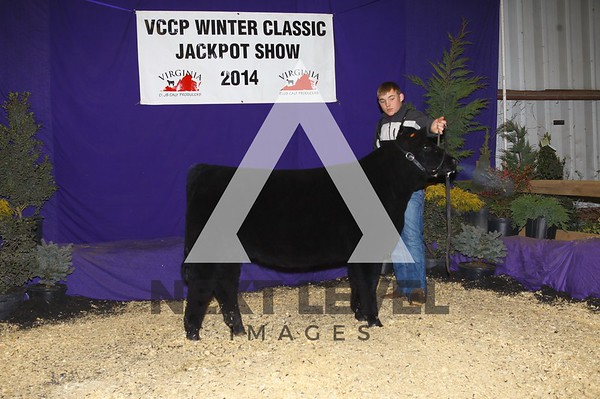 VCCP 2014 Steer Backdrop