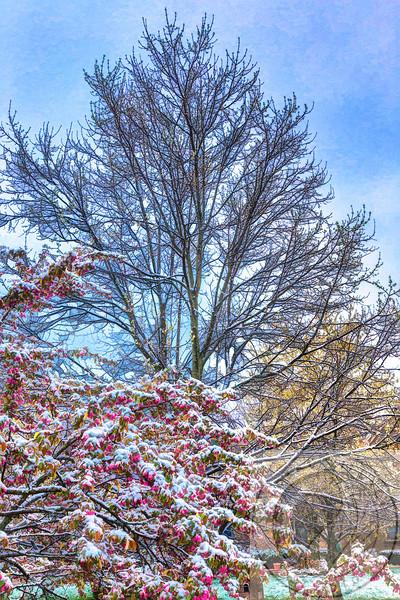 Spring Frosting Surprise April 2014