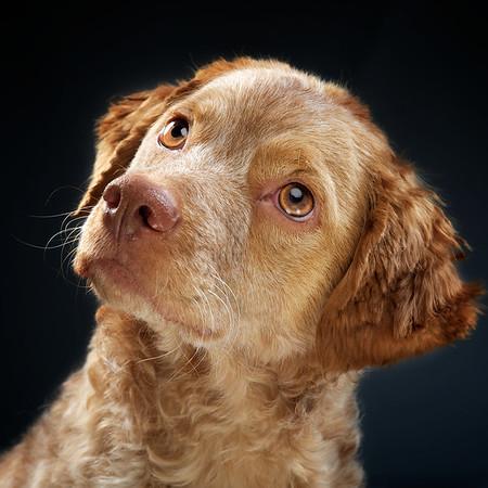2012-03-18 Dog Portraits