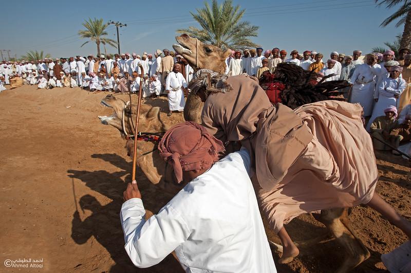 Camel Race  (6).jpg