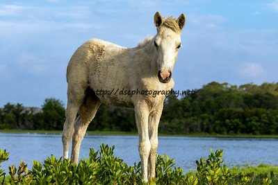 Checkers' Filly