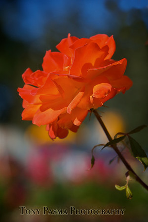 Fine Art Flowers
