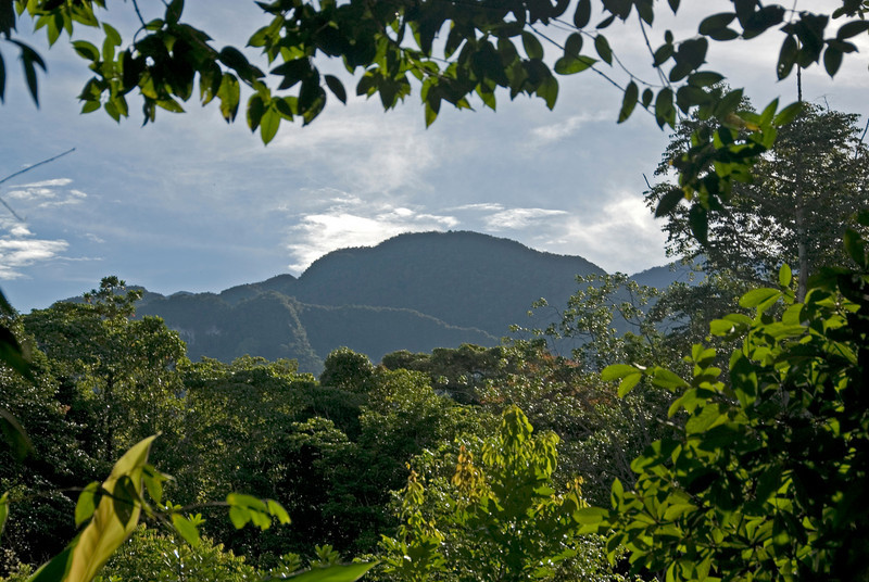 Overlooking the mount above thick forest canopy in Mulu National Park in Sarawak, Malaysia