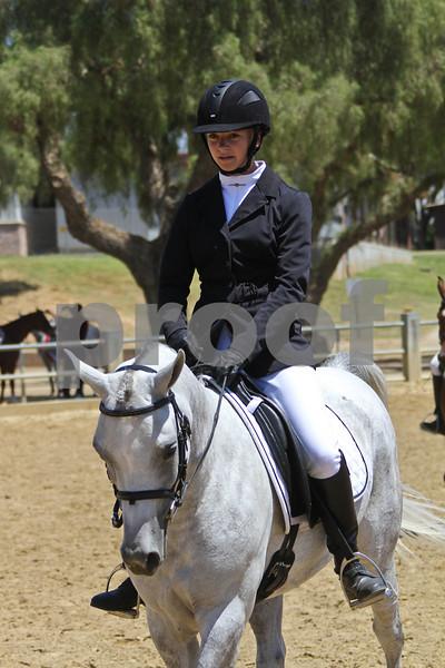 Arabian SH Under Saddle - Jr Horse