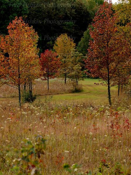 park trees.jpg