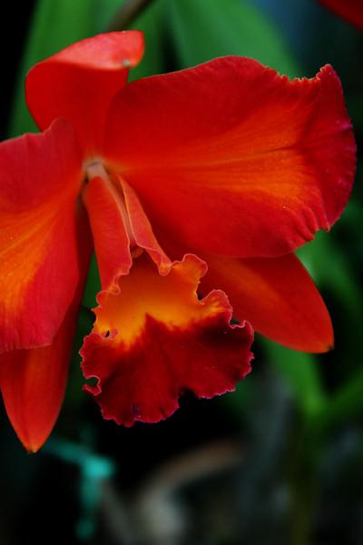 orchids 09 125.jpg
