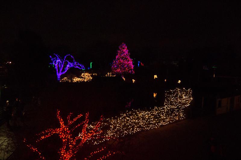 Toledo Zoo Light Show - 2014 - _CAI4505.jpg