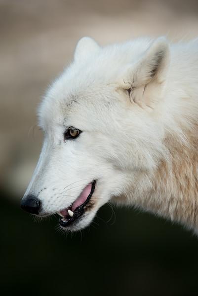 Seacrest Wolves_-71.jpg