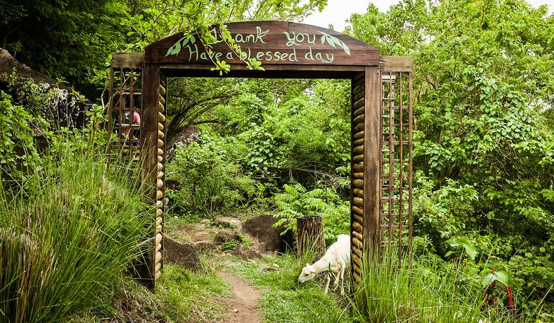 12May_St Lucia-fuji_308.jpg
