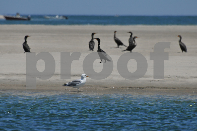 Pictues from cape and father day 138.JPG