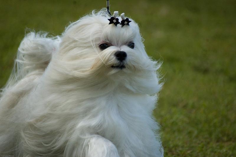 Boca Raton Dog Show-42.jpg