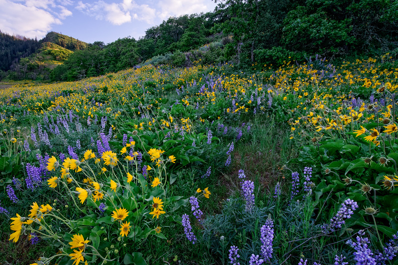 Wildflowers and Hillside