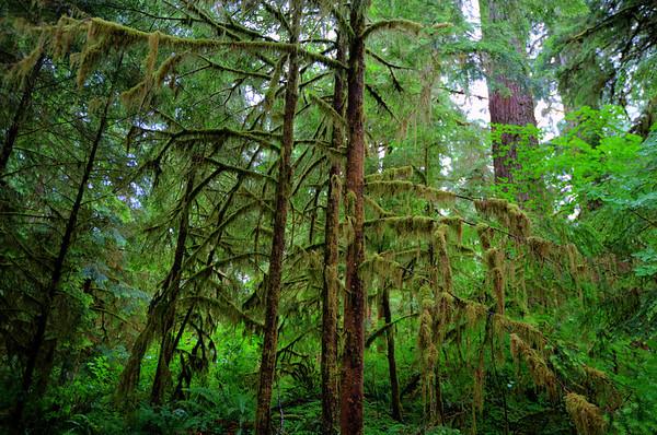 2011 - Quinault Rain Forest - 7/14