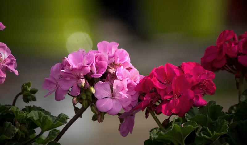 clip-015-hyvee_flowers-10may07-0032.jpg