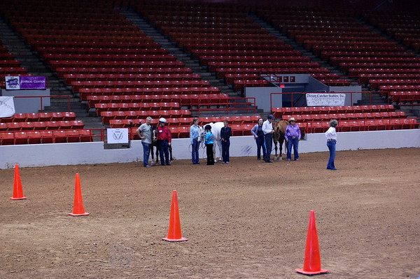 Houston Rodeo Horse Show 2012